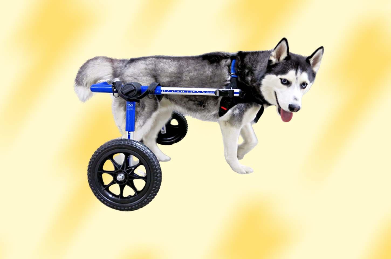 best-dog-wheelchair