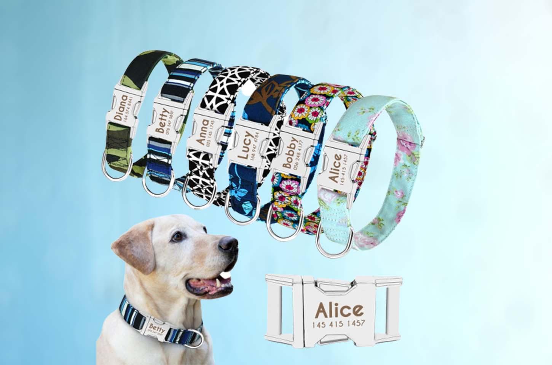 best-custom-dog-collars