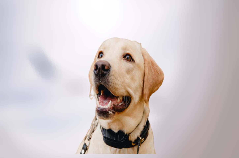 electronic-dog-collars