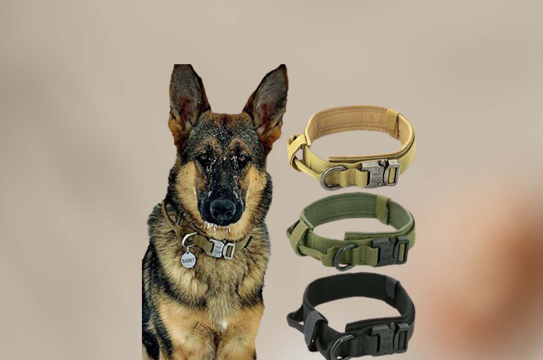 military-dog-collars