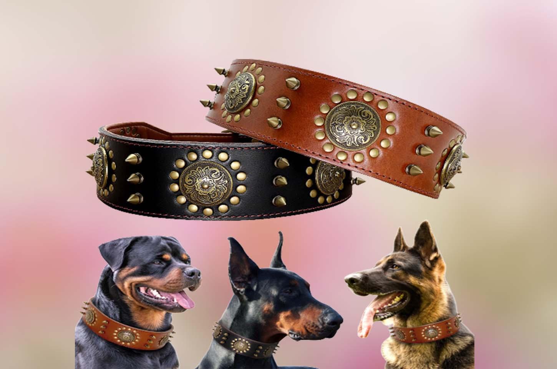 large-dog-collars