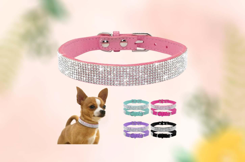 small-dog-collars